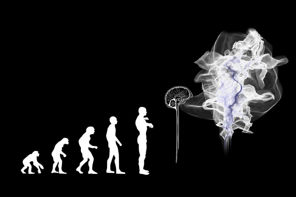 evolution, artificial intelligence, brain-3885331.jpg